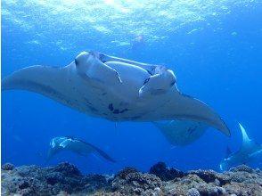 [Ishigaki Island / Kabira] Enjoy Ishigaki Fun diving! !! Rental equipment is free! !! 2dive plan !! Free shooting service included! !!