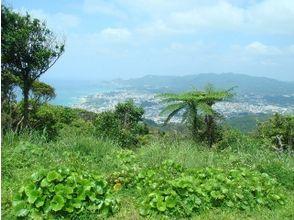 【沖縄・名護】大自然に癒される、南国トレッキングプラン!(半日コース)の画像