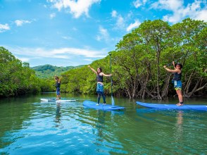 [Okinawa / Ishigaki Island] Let's adventure in the wild mangrove forest with SUP! (Photo data is free)