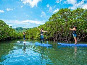 【沖縄・石垣島】大自然なマングローブ林をSUPで冒険しよう!(写真データ無料)