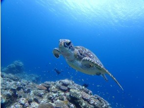 [Ishigaki Island / Kabira] Experience diving 2 courses at beautiful points of popular sea turtles and corals! !! Only 10 minutes by boat to the point ♪♪ [With free photo shoot]
