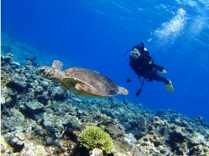 [From Naha / Kerama Chibishi Islands / Half day] \ Limited price / Fan diving (2 dives) | ◆ AM or PM ◆