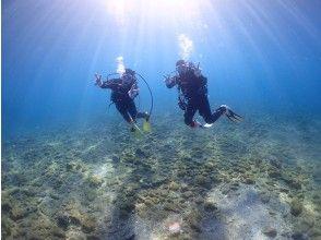 【和歌山・串本】カップルやグループにオススメ☆サンゴ礁が広がる本州最南端の海で体験ダイビング!