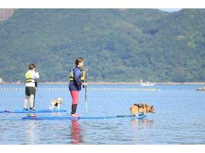 【和歌山 串本 古座川】未経験・初心者歓迎 南紀串本エリア半日SUP 愛犬同乗可 ※オプションでテントサウナも体験可!