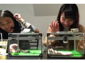 [Harajuku, Tokyo] A unique experience! Get in touch with many snakes at the popular Snake Cafe!