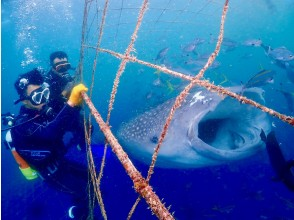 [Okinawa / Whale Shark / Experience Diving] The world's largest fish whale shark! 100% impression and 200% excitement! Completely chartered! Popular GoPro Photos & Videos Free ★