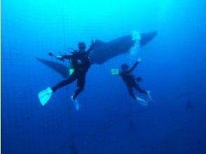 [오키나와 고래 상어 팬 다이빙] 세계 최대의 어류 고래 상어! 100 %의 감동과 200 %의 흥분! 전체 전세! 인기 GoPro 사진 및 동영상 무료