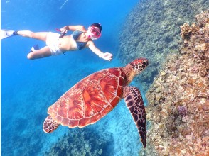 [Okinawa / Ishigaki Island] Let's swim from the beach! Sea turtle half-day snorkeling   Underwater camera rental free