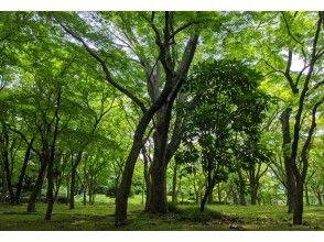 【2021東京ツアー】6/20(日)東京・千代田区 北の丸公園 オンライン森林浴