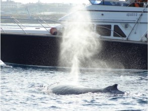 [Okinawa Kerama] winter tradition! Whale-watching (half day tour)