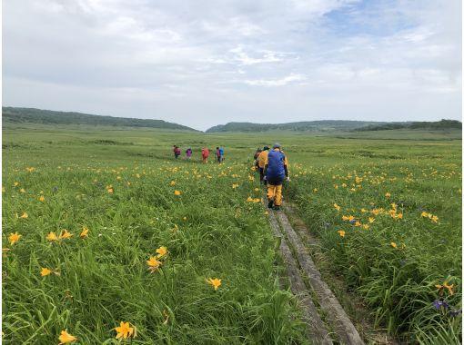 【北海道・空知】プロガイドと行く雨竜沼湿原ツアーの紹介画像