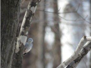 【北海道・苫小牧】プロガイドと行く野鳥の聖地「ウトナイ湖」周辺バードウォッチング&フォト