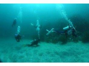 【山口・宇部市】楽しさ、感動をあなたに!日帰り体験ダイビング!の画像