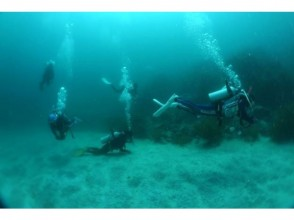 [Yamaguchi ・ Ube City】 Fun, excitement for you! One day trip experience Diving!