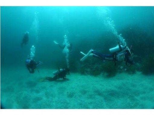 【山口・宇部市】楽しさ、感動をあなたに!日帰り体験ダイビング!の紹介画像