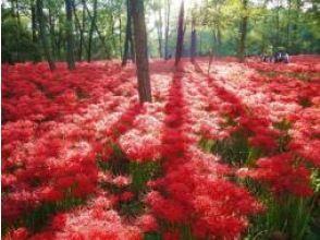 """搭乘新特快列车Laview! 500万棵树盛开的""""Metsa Village""""和""""Kinchakuda Manju Saka""""巴士之旅[3密集措施] [P017197]"""