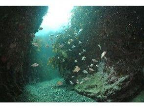 [Yamaguchi ・ Ube City】 PADI Open Water Diver Course! (4 days-)