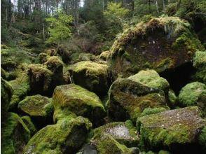 【長野・北八ヶ岳】親子登山で夏休みの自由研究も解決!茶臼山トレッキングと地獄谷探訪
