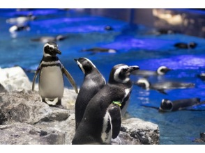 It 's great! Let's go to Sumida Aquarium! -A picture book of real creatures learned in English! ~