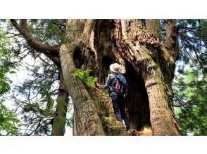 【2021立山黒部オンラインツアー】立山黒部アルペンルート 立山杉とブナに抱かれる旅