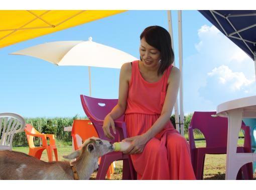 【宮古島】広大なアロエ畑で子ヤギさんミルクやり体験 手ぶらOK