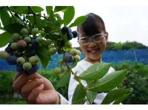 【和歌山・海南市】新鮮なブルーベリー摘みとり体験~ファミリー・女性におすすめ!ブルーベリー250gお土産付き