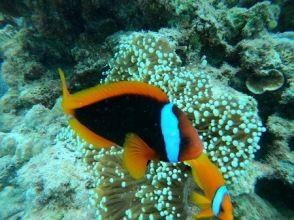 """【冲绳北谷体验潜水】✨令人印象深刻的""""包车""""体验潜水,带热带鱼和珊瑚花田✨ GoPro 照片和视频免费!免费喂食!"""
