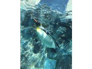 [Asahiyama Zoo / Biei / Furano] Asahiyama Zoo → Blue Pond → Shirogane Falls → Farm Tomita by hire!