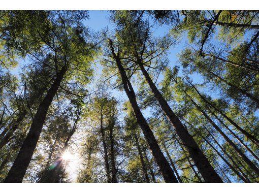 【栃木・奥日光】巨木の森を歩こう!西ノ湖・千手ヶ浜でのびのび森林浴ハイキング【ほぼ貸し切り!?とっておきの道へご招待】の紹介画像
