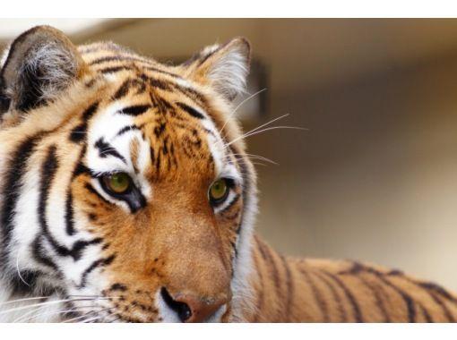えいごでどうぶつえん!Let's go to 京都市動物園!~英語で学ぶリアルいきもの図鑑!~の紹介画像