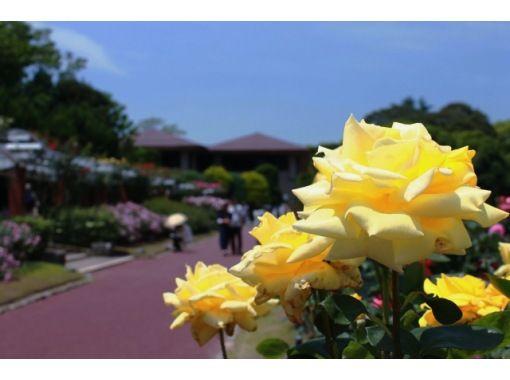 えいごでしょくぶつえん!Let's go to 京都府立植物園!~英語で学ぶリアルくさばな図鑑!~の紹介画像