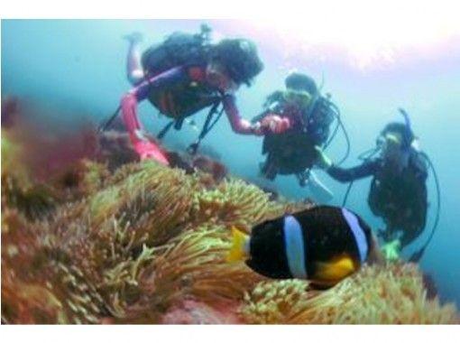 [靜岡伊藤Jogasaki埠頭伊豆海洋公園Yawatano]隨便享受大海!孩子們體驗潛水項目の紹介画像