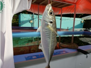 【千葉・館山】猫サメくん入荷!新鮮なアジ釣りが楽しめる釣堀♪ 釣ったアジをその場で焼いて食べれる体験☆