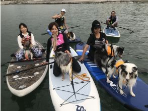"""<Chartered> 2-3 people group private """"Dog SUP plan (about 2 hours)"""""""