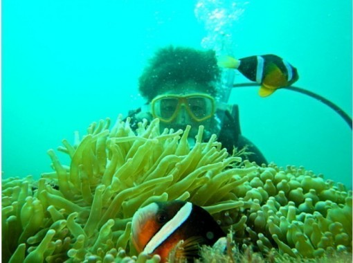 [Jogasaki coast] 1 Instructor chartered A relaxing and fulfilling experience Diving! Photo book present!の紹介画像