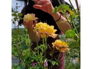 【広島・神石】2021年10月17日・11月6日開催! 乙女度100%! 食べるバラの摘み取りとスイーツ作り体験