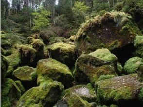 【長野・北八ヶ岳】コケの森トレッキングと地獄谷探訪!
