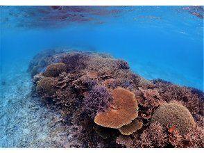 【沖縄県・伊平屋島】スキンダイビング!瑠璃色の大海原をサンゴと共に【豊富なサンゴ】【プライベート感】【水中写真付き】