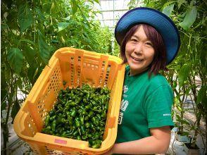 """【岩手・遠野】*2名様~6名様用*""""ビールのおつまみ野菜""""遠野パドロン収穫体験"""