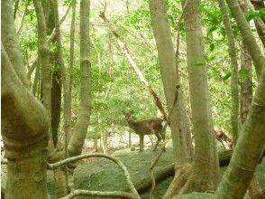 【鹿児島・屋久島】車で行ける!世界遺産登録地区・西部林道(1日コース)の画像