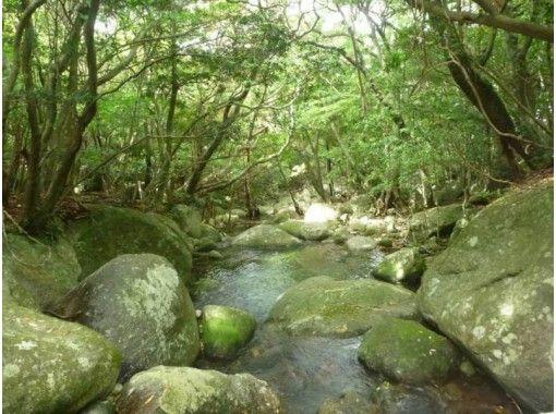 【鹿児島・屋久島】車で行ける!世界遺産登録地区「西部林道トレッキング」(半日コース)