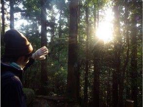 【鹿児島・屋久島】初めての方も安心!屋久島と言ったら縄文杉!縄文杉トレッキングツアー(日帰りコース)