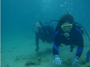 [Kagoshima] Recommended for beginners! Amami Oshima experience diving! Image of