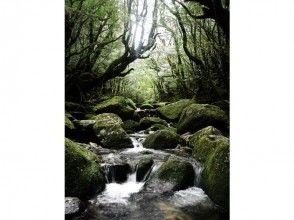 【屋久島トレッキング】白谷雲水峡 1日ツアーの画像