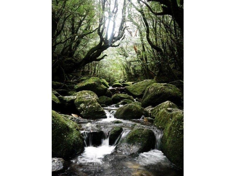 【屋久島トレッキング】白谷雲水峡 1日ツアーの紹介画像