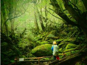 【鹿児島・屋久島】白谷雲水峡の頂上「太鼓岩」を目指すツアー!もののけの森も通ります(1日ツアー)