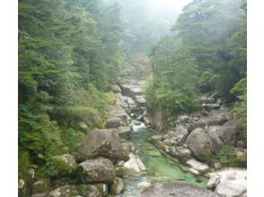 【鹿児島・屋久島】気軽に屋久杉を楽しめるヤクスギランドトレッキング(半日コース)の画像