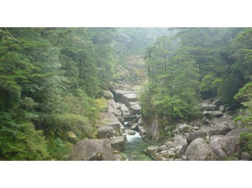 【鹿児島・屋久島】初心者の方でも気軽に屋久杉を楽しめる「ヤクスギランドトレッキング」(半日コース)