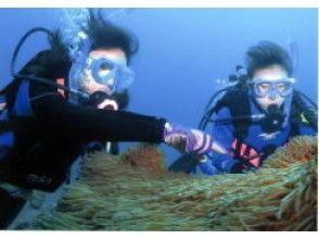 [가고시마·타네가시마] 수중 세계의 모험 체험다이빙코스