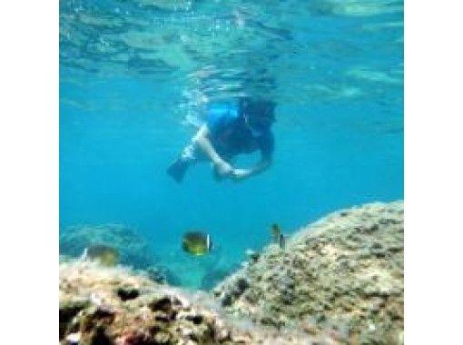 [Kagoshima ・ Tanegashima Feel free to observe tropical fish Snorkeling(half-day course)の紹介画像